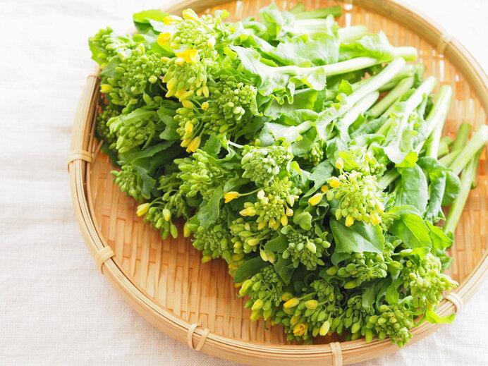 和種アブラナから改良された食用菜の花。春の味覚です