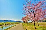 北陸の桜名所〜密を避けて2021年のサクラを楽しもう〜