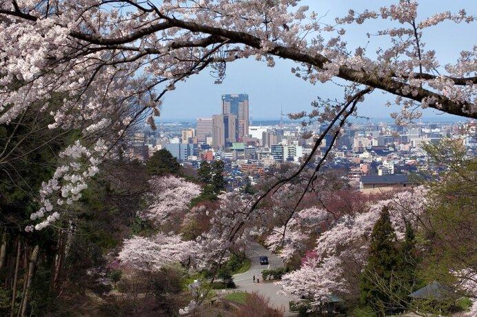 四百年の森を散策!卯辰山を走る道沿いでは車からのお花見も/卯辰山公園の桜(石川県金沢市)