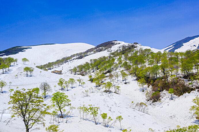 空の青・雪の白・新緑の緑!初夏のスキーを楽しもう/月山夏スキー場(山形県西村山郡)