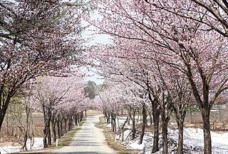 東北の桜名所〜密を避けて2021年のサクラを楽しもう〜