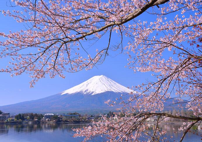 富士山・桜・湖を贅沢な1枚に!美しい日本の春がきた/河口湖畔北岸の桜(山梨県南都留郡)