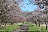 2021年もありがとう!桜前線フィナーレを飾る北海道の名所4選
