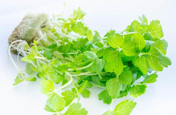 透き通る新玉ねぎを使って~新玉ねぎ×サラダセロリ(セロリスプラウト)×サーモンのサラダ