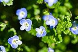足元に広がる色彩の宇宙。春の小さな野の花を探してみよう