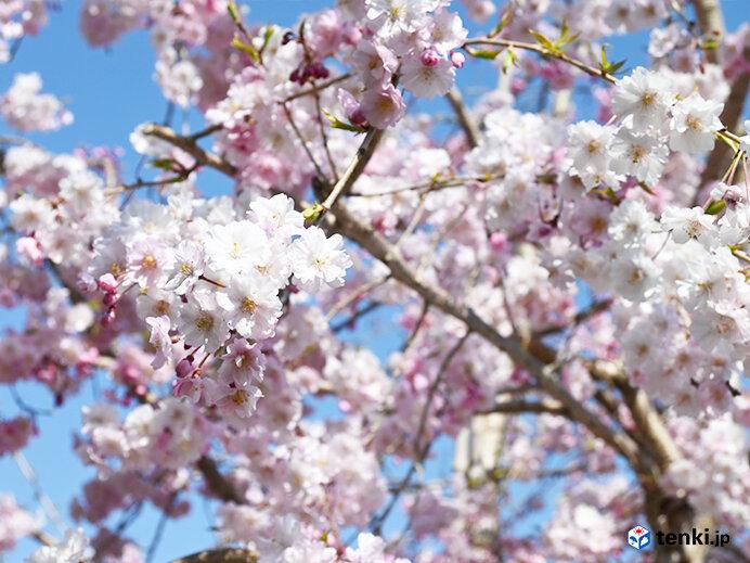 次の10年へ この先も桜と共に
