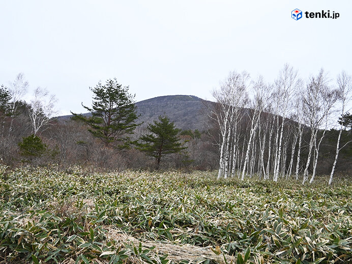 登山道中から見えた泉ヶ岳