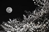 4月27日の満月は「ピンクムーン」。来月は「スーパームーン」で皆既月食!