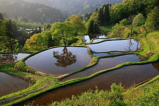 命めぐる究極の楽園。もしも水田が列島から消失してしまったら?
