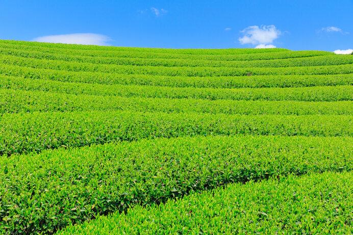 5月のこれぞ旬といえば。年に一度の新茶の季節を味わおう