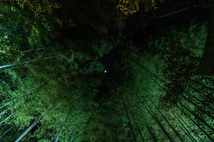 竹もまた萩原朔太郎を象徴するモチーフです