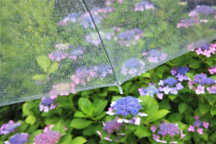 梅雨の漢字はどうして「梅」と「雨」?意外な理由を解説