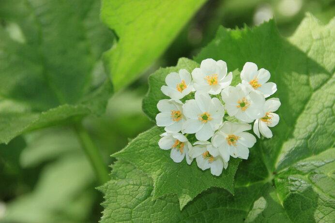 白い花のときもかわいらしい