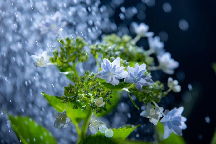 日本人が「雨」に感じてきたものは……