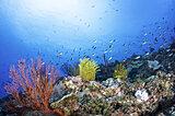 6月8日は「世界海洋デー」。果てしなく広がる海を皆で守ろう