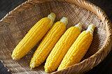 トウモロコシのひげの本数と粒の数は同じ! 粒は必ず偶数!