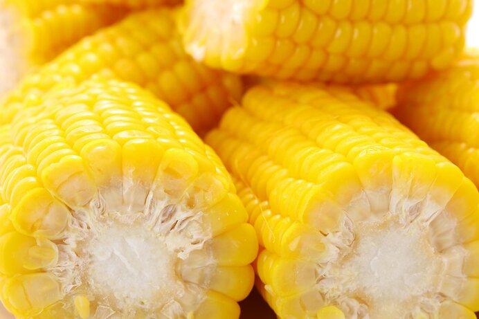トウモロコシの粒は必ず偶数。列も必ず偶数