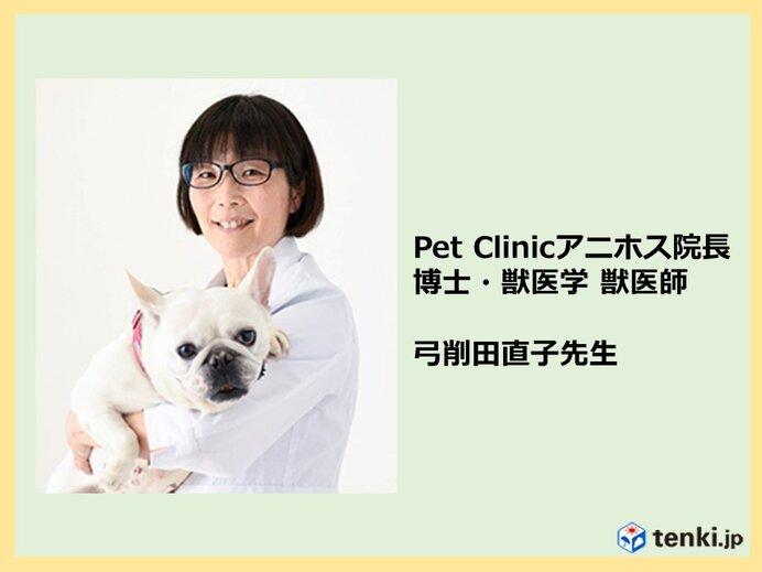 ペット防災「犬や猫の災害時の避難」~ペットとの避難のポイントは?専門家の獣医師さん聞きました~_画像