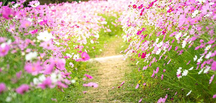 花もコスモス、宇宙もコスモス。両者の共通点は?_画像