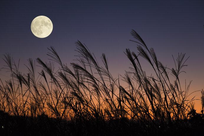 「仲秋の名月」をながめたら、いよいよ秋は夜長へ!