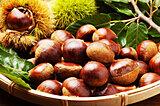 9月に旬を迎える食材『栗』を食べて秋の訪れを感じよう♪おすすめレシピを厳選紹介