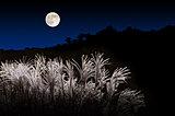 満月は8年ぶり!一年でいちばん美しい月、9月21日は「中秋の名月」です