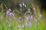 散策路にもきっと見つかる!趣き深い秋の野の花六選