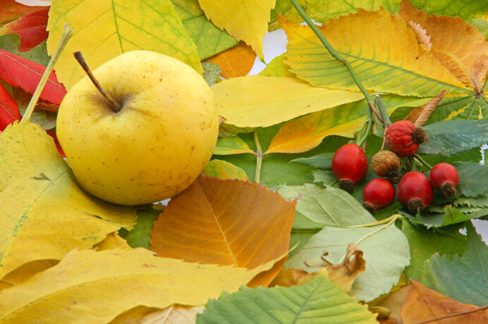 やっぱり食べたい秋の味覚!節約重視の晩ごはん、楽しみませんか?
