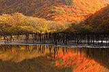 逢いたい東北の紅葉!絶景を楽しむ紅葉名所【岩手・宮城・福島】