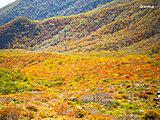 秋山ならではの絶景に会いに行こう! 「紅葉」情報や「雲海」の条件は? 登山天気アプリの活用法も紹介