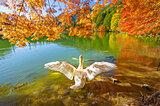 山梨・長野の美しい晩秋!絶景を楽しむ紅葉名所【甲信エリア】