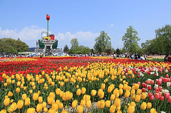 となみチューリップフェアの風景。左奥は「チューリップタワー」  写真提供:(公社)富山県観光連盟