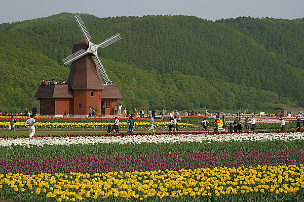 チューリップに風車。民族衣装を借りたら気分はオランダ!!