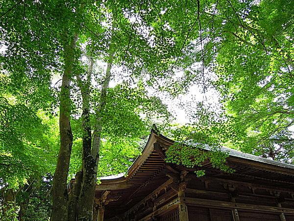 """""""夏草や 兵どもが 夢の跡""""。芭蕉の足跡をたずねて、新緑まぶしい世界遺産・平泉へ"""