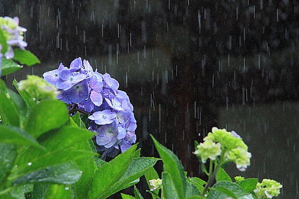日本人は「梅雨(つゆ)」が好き...