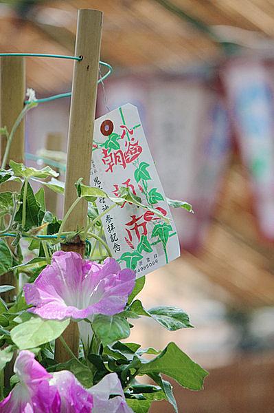 二十四節気「小暑」・七十二候初候「温風至る」~季節の風物詩と言えば…?