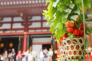 4万6000日分のご利益が!? 7月9日・10日は江戸下町の夏の風物詩、浅草浅草寺「ほおずき市」