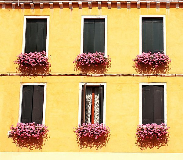 """窓辺に """"ゼラニウム"""" を飾って 「虫よけ」 !! 花のいい香りは、虫にとってはイヤな匂い !!"""