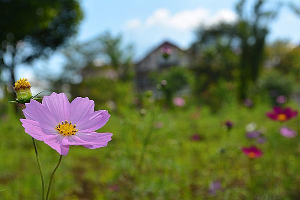 英国風の「ゆにガーデン」。美しく整備された庭園に四季折々の花が咲く。