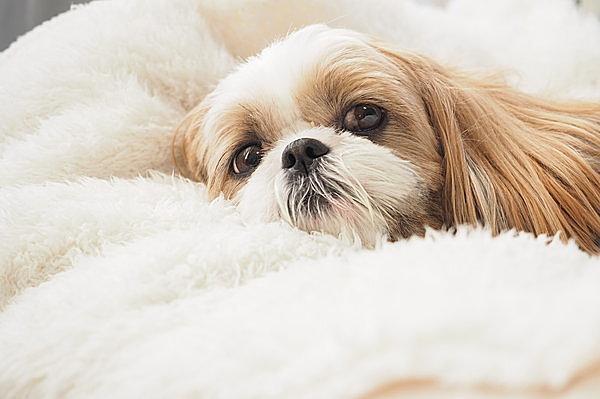 残暑にこそご用心! 愛犬の熱中症に気をつけよう