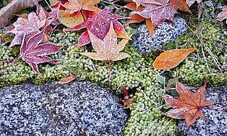 行く秋を見送る歳時記~二十四節気「霜降(そうこう)」