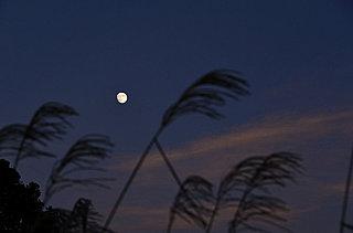 今宵25日は十三夜、別名「栗名月」。一年で2番目に美しい月・十三夜にみる日本人の精神性とは──