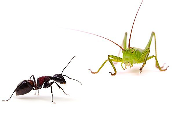 七十二候「蟋蟀在戸(きりぎりすとにあり)」。アリに叱られるような夏だったのでしょうか?