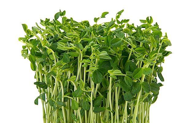 リボベジって何? 野菜のヘタを水につけておくだけで、もう一度食べられるなんて