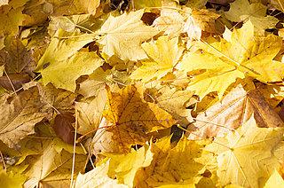 11月後半の連休…お出かけ先で冬の季語を見る