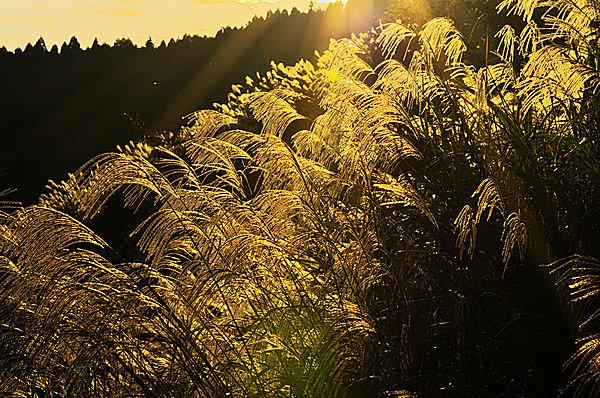 三夕の和歌で「もののあはれ」の秋に浸ろう