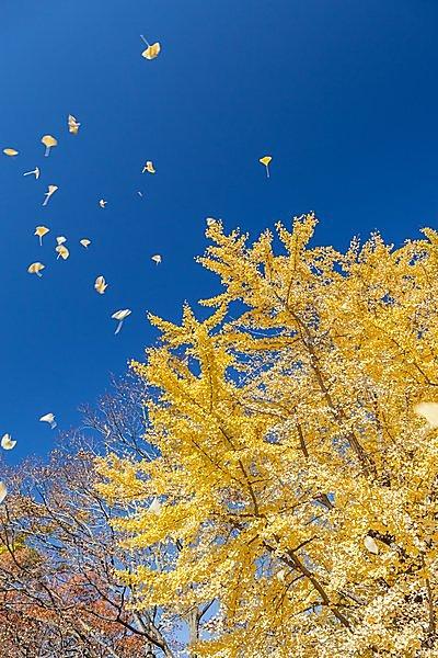 飛び立つ小鳥たち