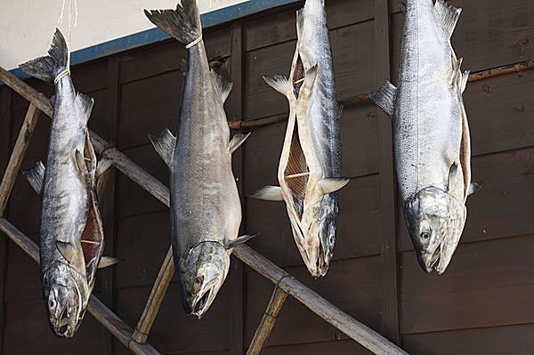 塩引きされた鮭を「シオンビギ」や「ションビキ」と読む地域も