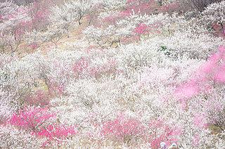 二月の花暦 「梅」~春が来た、梅を見に行きませんか?