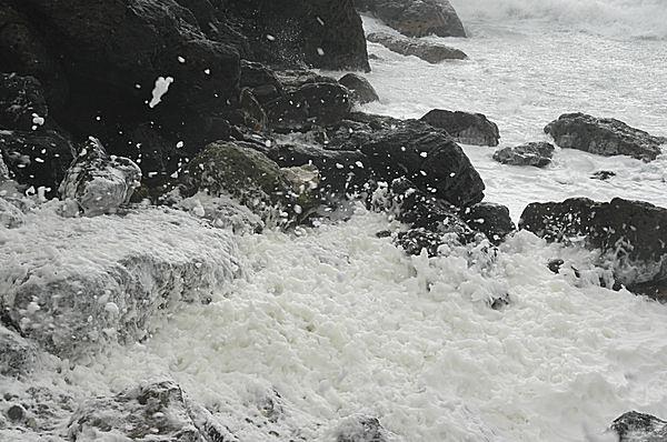 「波の花」の正体はプランクトン!? 北海道の厳冬の海に浮かぶアワアワ。出会うのは難しいらしい